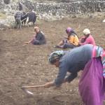 Ackerbau wie bei uns vor hunderten von Jahren